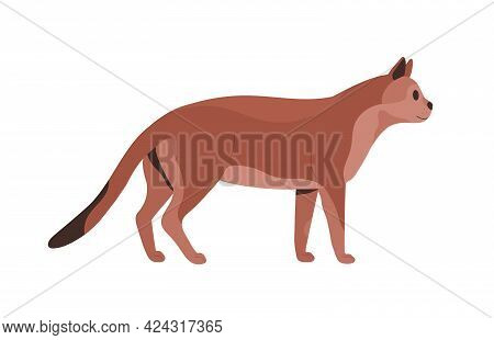 Side View Of Mature Cat. Feline Animal Standing And Looking Forward. Profile Of Adult Well-fed Puss