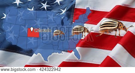 Usa Map With Marked State Of Colorado And Potato Beetles. Banner Design