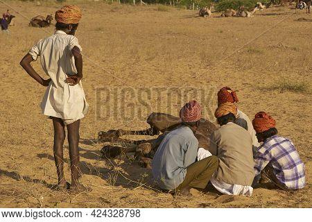 Pushkar, Rajasthan, India - November 6, 2008: Group Of Men Attach A Halter To A Struggling Camel At