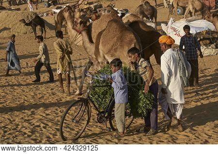 Pushkar, Rajasthan, India - November 7, 2008: Boys Load A Bicycle With Animal Fodder At The Annual P