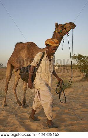 Pushkar, Rajasthan, India - November 7, 2008: Camel Herder Arriving At The Annual Pushkar Fair In Ra