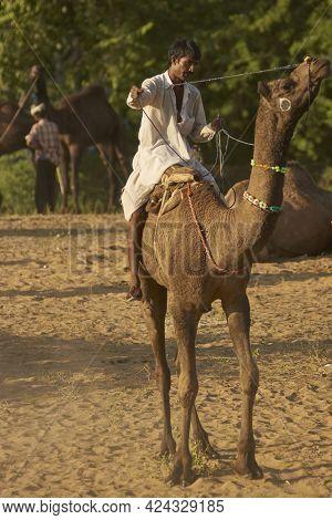 Pushkar, Rajasthan, India - November 8, 2008: Man Riding A Camel At The Annual Pushkar Fair In Rajas