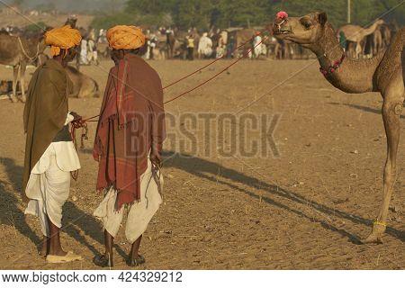 Pushkar, Rajasthan, India - November 9, 2008: Group Of Camel Herders At The Annual Pushkar Fair In R