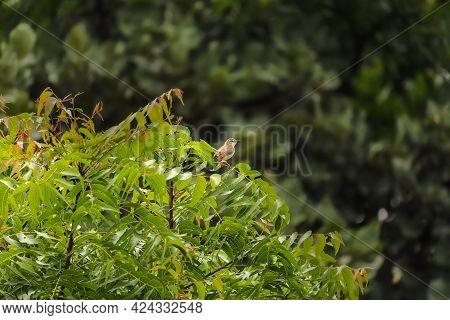 Weaver Bird Sitting On The Tree , Birds Watcher , Birds Photography