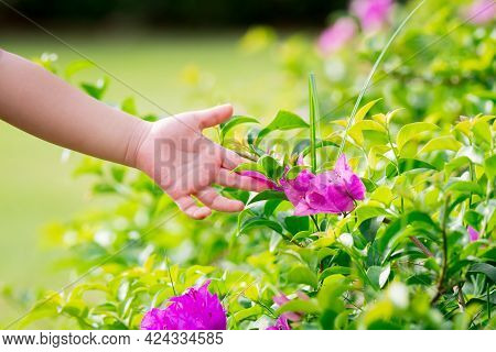 The Little Girl's Hand Was Touching The Surface Of The Pink Flower. Person Praising Paper Flower. In