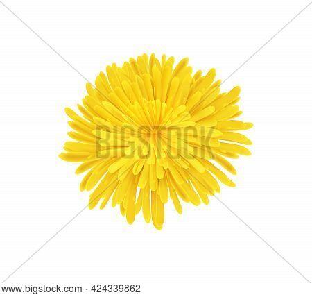 Yellow Dandelion Flower On White Background Realistic Vector Illustration