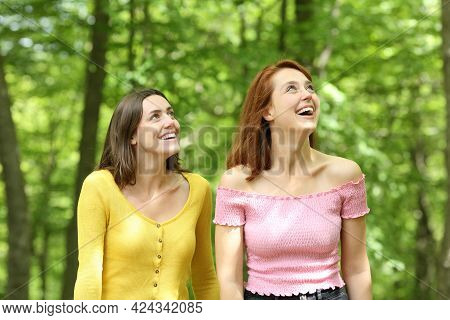 Two Amazed Friends Contemplating Views Walking In A Forest On Summer