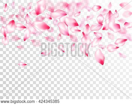 Spring Tree Flowers Parts, Airy Flying Petals On Transparent Background. Anniversary Background. Flo