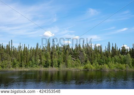 Small River Flowing In Boreal Forest On A Sunny Day