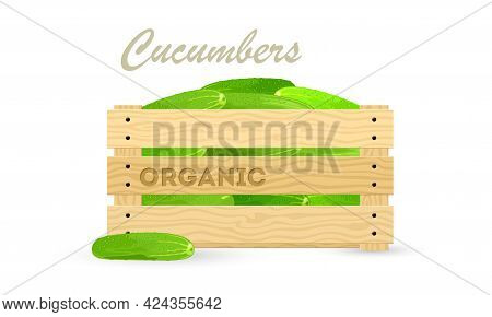 Fresh Cucumbers In Wooden Crate, Grandmother Farm Harvest, Vegetable For Export. Vector Container Wi