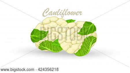 Organic Food, White Cauliflower Vegetable, Cabbage With Green Leaves. Vector Healthy Eating, Vegetar