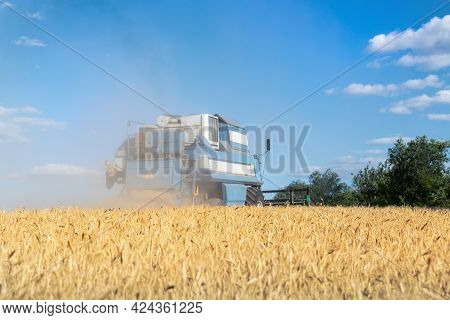 Harvested Mowed Golden Wheat Field On Bright Summer Or Autumn Day Against Combine Harvester And Vibr