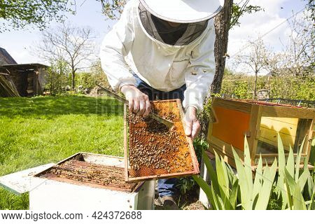 Beekeeper Is Looking Swarm Activity Over Honeycomb On Wooden Frame, Control Situation In Bee Colony.