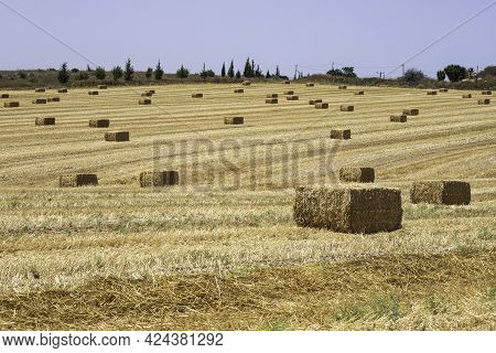 Haystacks On A Mown Field With Trees And Hills On The Horizon. Harvest