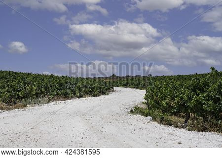 White Chalk Country Road Between Vineyards Against The Sky With Clouds