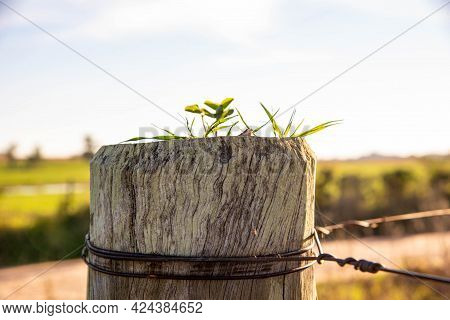 Plant Germinating On A Rural Property Fence Post