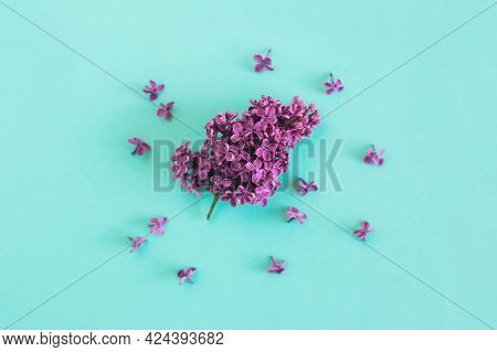Branch Of Blossoming Lilac On A Turquoise Background.  Flat Lay. Place For Text.