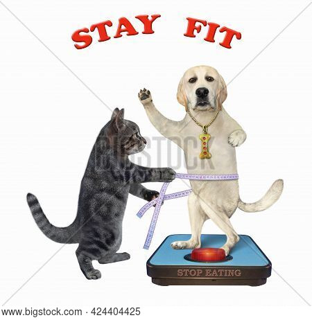 A Gray Cat With A Soft Measure Tape Is Standing Near A Weigh Scale With A Dog Labrador. White Backgr