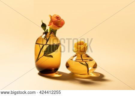 Yellow And Coral Garden Roses In Glass Vases On Beige Background With Hard Long Shadow