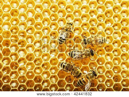 Working bees on honey cells.
