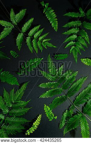 Different Types Of Fern Fern Leaves, Green Leaves - Winter Fern Leaves, Light And Shade Indoor Photo