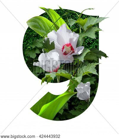Stylized Font High Res Stock Images, Floral Design Text, Letter G, Isolated On White Background
