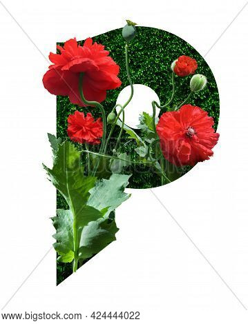 Stylized Font High Res Stock Images, Floral Design Text, Letter P, Isolated On White Background