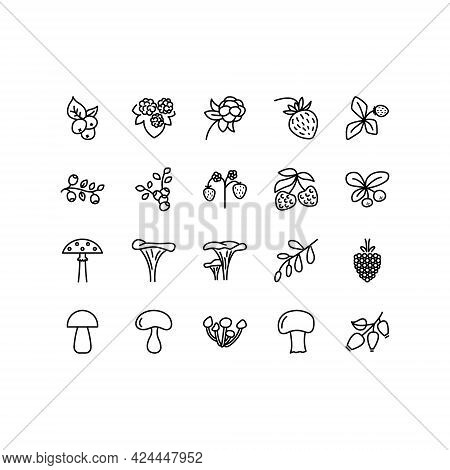 Forest Berries And Mushroom Flat Line Icons Set. Fresh Berries Raspberry, Lingonberry, Blueberry, Bl