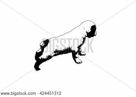 Silhouette Of A Central Asian Shepherd On A White Background. Puppy Turkmen Alabai With Cropped Tail