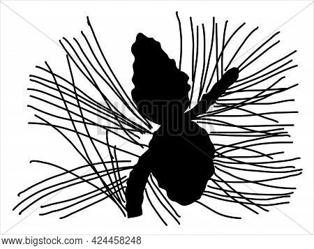 Pine Leaf In The Doodle Style. Hand-drawn Silhouette With A Fir Cone.  Botanical  Vector Illustratio