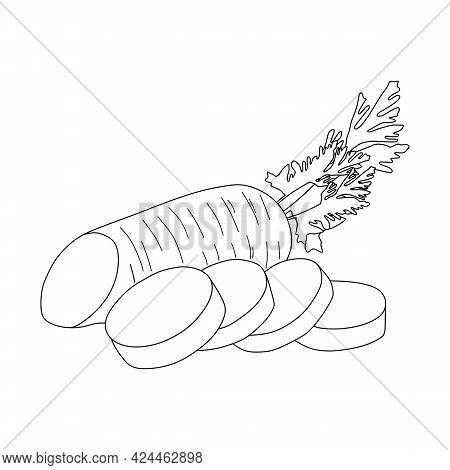 Sliced carrot Illustration. Line Sketch Of A Carrot. Carrot Symbol.