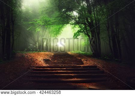 Beautiful Mystical Forest. Magic Tree In The Sunny Foggy View. Scenery With Stair Path In Dreamy Fog