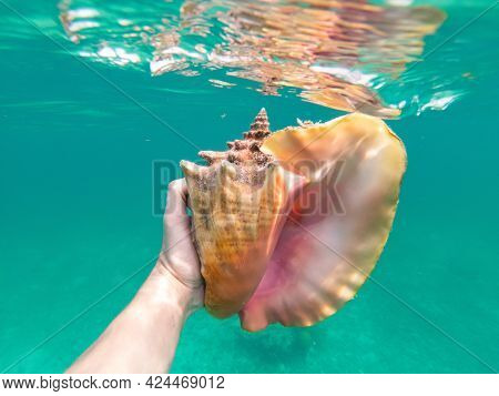 Hand Of Snorkeling Man Holding Huge Conch Shell Underwater. Concept Of Travel, Vocation And Adventur