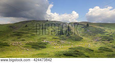 Beautiful Valley In National Park Biogradska Gora. Montenegro.