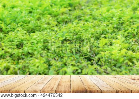 Shelf Of Brown Wood Plank Board With Blurred Green And Pink, Violet Or Purple Flowers Field Farm Nat