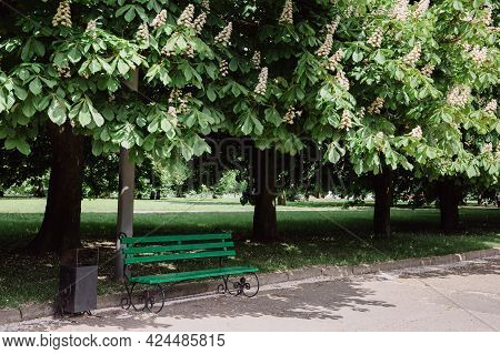 City Park. Green Bench Against Background Of Chestnut Alley. Chestnuts Blooming In Spring.