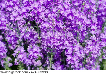 Beautiful Spring Background From A Large Number Of Flowers. Spring Postcard