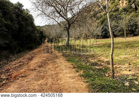 Mountain Landscape And Path Between With Green Vegetation In Spring In Castilla-la Mancha, Spain
