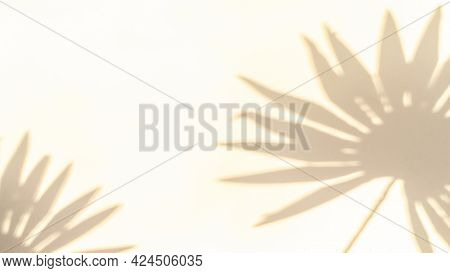 Flowers Shadow Summer Background. Plant Leaf Shadows On White Wall In Abstract Tropical Sunlight Tex