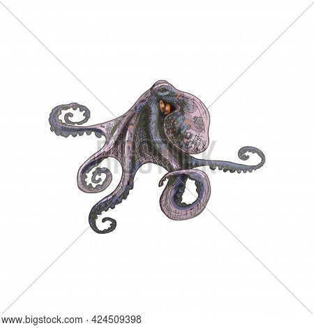 Octopus. Vintage Hatching Color Illustration Isolated On White Background. Hand Drawn Design In A Gr
