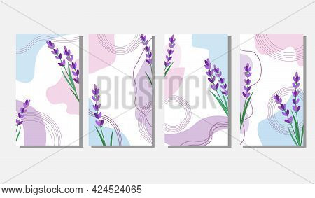 Set Of Backgrounds With Lavender. Abstract Template With Spots And Flowers. Vector Illustration Isol