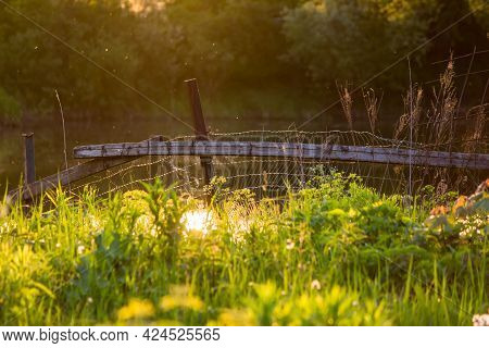 Landscape With A View Of Grassy Thickets And A Fence During Sunset