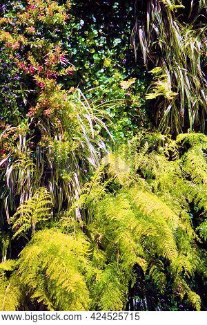 Lush Green Manicured Plants And Ferns At A Temperate Canyon Taken In The Northern California Coast