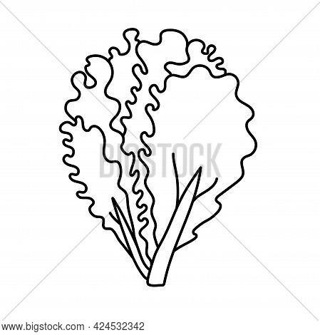 Lettuce. Vegetable Sketch. Thin Simple Outline Icon. Black Contour Line Vector. Doodle Hand Drawn Il