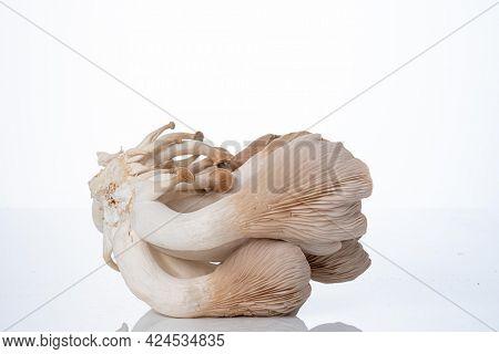 Pleurotus eryngii known as king trumpet mushroom, French horn mushroom, king oyster mushroom  on white
