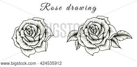 Hand Drawn Sketch Of Rose Flower Isolated On White, Floral Illustration Of Black And White Rose Draw