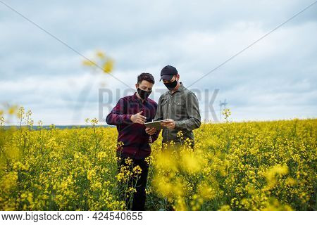 Agronomists In Masks Are Checking The Rapeseed Field. Ripe Harvest. Two Young Farmers In The Middle