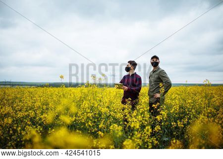 Two Successful Farmers Test Their Rapeseed Field. Agronomists In The Middle Of A Field With A Ripe C