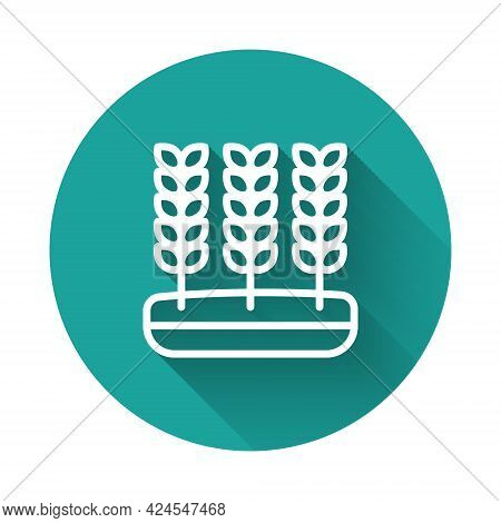 White Line Cereals Set With Rice, Wheat, Corn, Oats, Rye, Barley Icon Isolated With Long Shadow Back