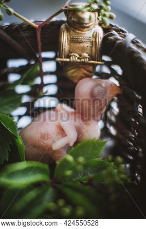 Small Newborn Rose-ringed Or Ring-necked Parakeet With Plants